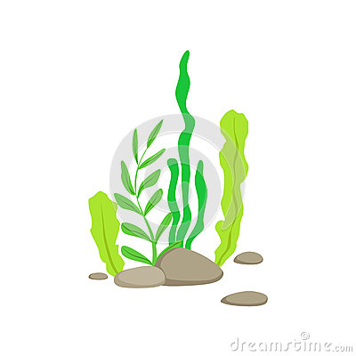 Free Set Of Different Bottom Underwater Algae Growing On The Rock Royalty Free Stock Photo - 80733505