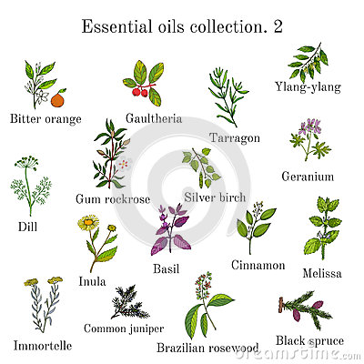 Free Set Of Essential Oil Plants. Hand Drawn Ector Illustration Royalty Free Stock Image - 88786916