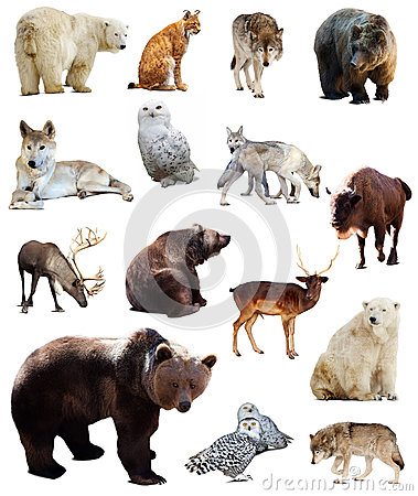 Free Set Of European Animals. Isolated Over White Royalty Free Stock Photo - 41521535