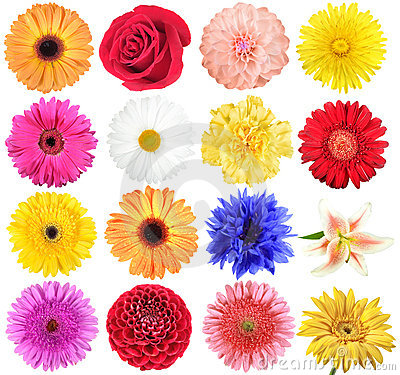 Free Set Of Flowers Royalty Free Stock Image - 15992996
