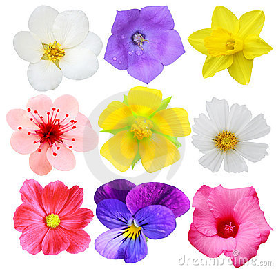 Free Set Of Flowers Royalty Free Stock Photo - 5554185