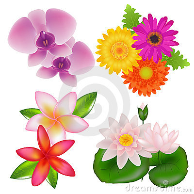 Free Set Of Flowers. Vector Royalty Free Stock Photos - 14481978