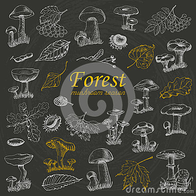 Free Set Of  Forest Plants And Mushrooms On Black Background Stock Image - 77066831