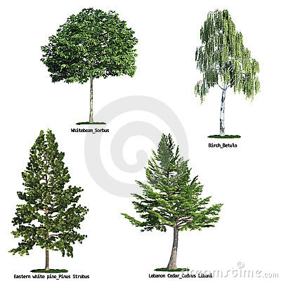 Free Set Of Four Trees Isolated Against Pure White Stock Images - 8961144