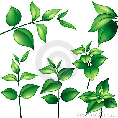 Free Set Of Green Leaves Royalty Free Stock Images - 9516349