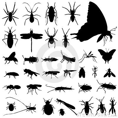 Free Set Of Insect Vector Royalty Free Stock Image - 6919696