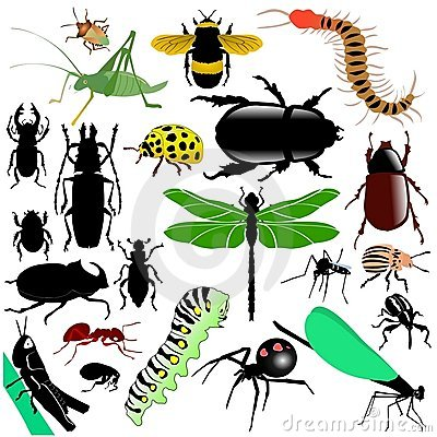 Free Set Of Insects Royalty Free Stock Images - 14152149