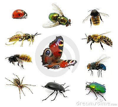 Free Set Of Insects Royalty Free Stock Images - 23426839