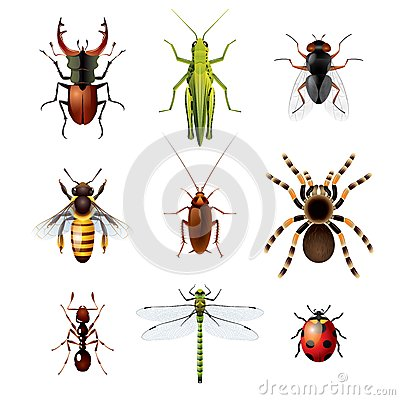 Free Set Of Insects On White Background Stock Photos - 35641713