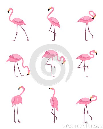 Free Set Of Isolated Tropical Greater Flamingo Royalty Free Stock Images - 127218149