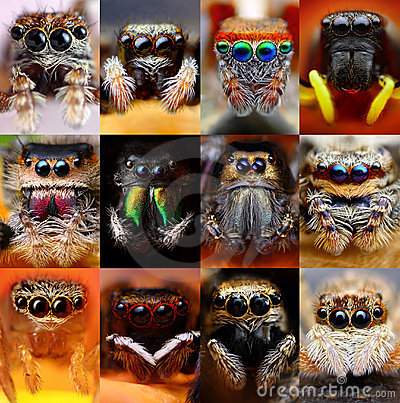 Free Set Of Jumping Spiders Stock Images - 23520184