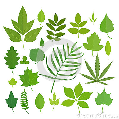 Free Set Of Leaves Royalty Free Stock Image - 74671636