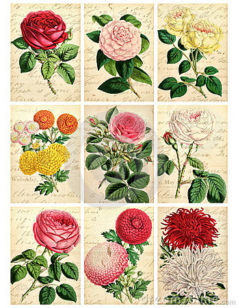 Free Set Of Nine Shabby Vintage Floral Cards Royalty Free Stock Photos - 23248628