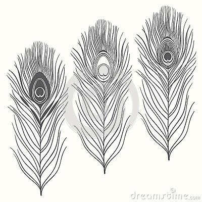 Free Set Of Peacock Feathers Isolated On White Background. Hand Draw Royalty Free Stock Image - 48532456