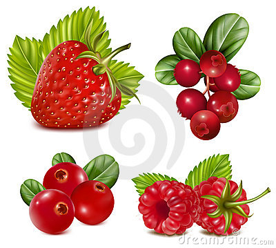 Free Set Of Red Berries With Leaves. Stock Photography - 18778552