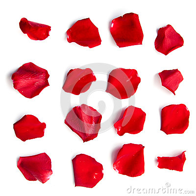 Free Set Of Red Rose Petals On White Royalty Free Stock Photography - 69797867