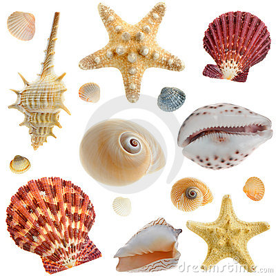 Free Set Of Sea Cockleshells Royalty Free Stock Image - 8001776