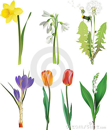 Free Set Of Spring Flowers. Royalty Free Stock Image - 13521376