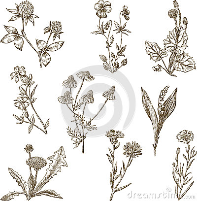 Free Set Of The Wild Flowers Royalty Free Stock Photography - 46847487