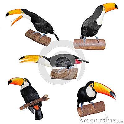 Free Set Of Toucans Royalty Free Stock Photo - 56560685