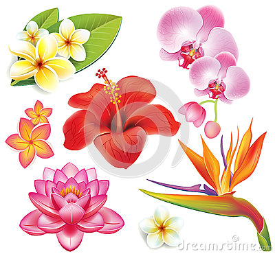 Free Set Of Tropical Flowers Royalty Free Stock Photo - 25823865