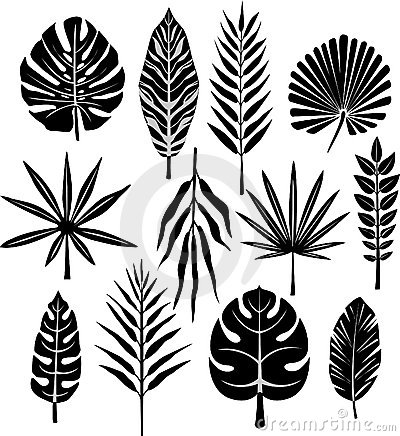 Free Set Of Tropical Leaf Stock Photography - 10350692