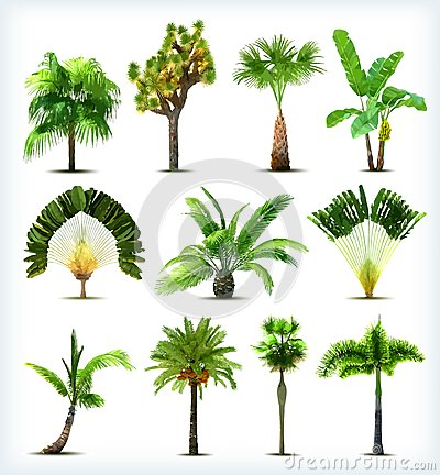 Free Set Of Various Palm Trees. Vector Stock Images - 31730604