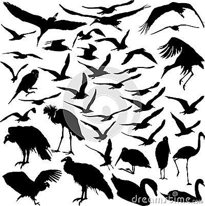 Free Set Of Vector Birds Stock Photography - 12538072