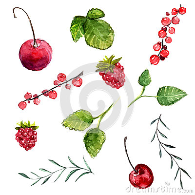 Free Set Of Watercolor Berries Cherry, Red Currant And Raspberry, Leaves Of Mint And Rosemary. Vector Design Elements Isolated On White Stock Image - 48056671