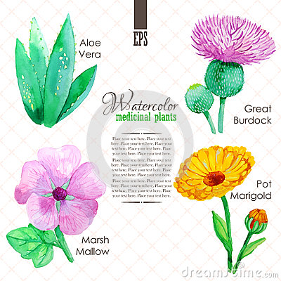 Free Set Of Watercolor Madicinal Plants Stock Images - 51500114
