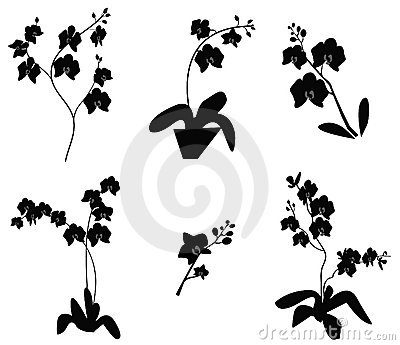 Set of Orchid branch silhouette