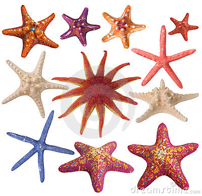 Set Of Painted Sea Star Royalty Free Stock Photo - Image: 9299395