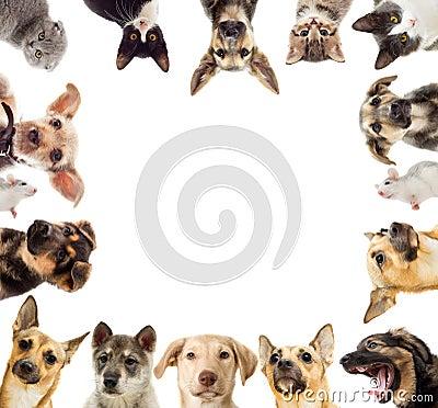 Free Set Pets Stock Photography - 47357892
