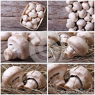 Set photos of champignon mushrooms on old desk Stock Photo