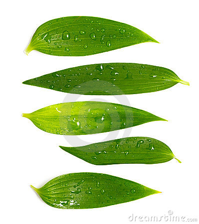 Set of rich green leaves