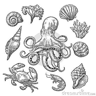 Free Set Sea Shell, Coral, Crab, Shrimp And Octopus. Royalty Free Stock Photos - 85981668