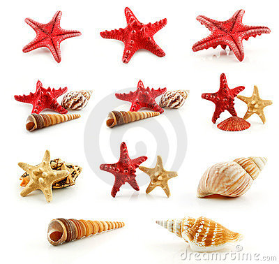 Set of Seashells (Starfish and Scallop) Isolated