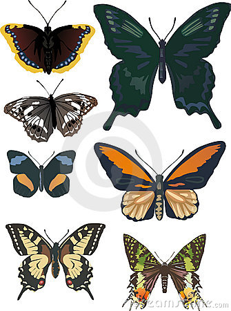 Set of seven different butterflies