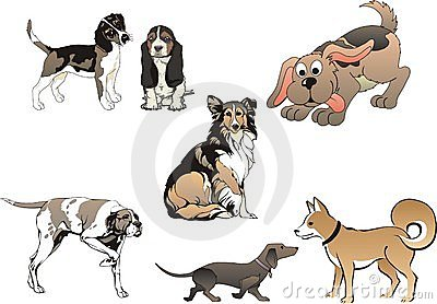 Set of seven dogs - vector
