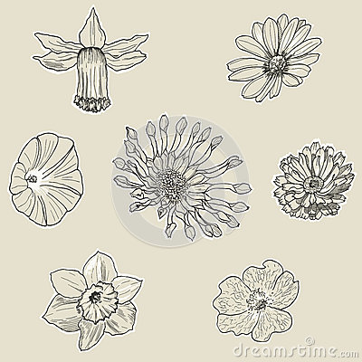 Set of seven graphic flowers