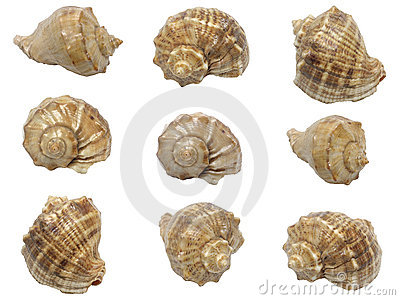 Set of shells of marine molluscs