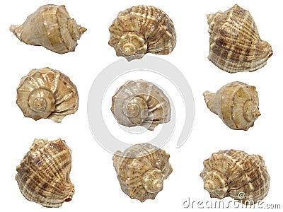 Set of shells of marine molluscs