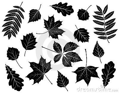 Set of silhouettes of leaves.