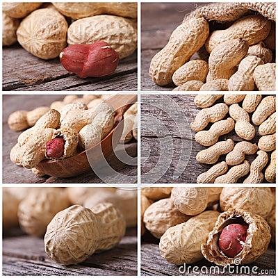 Set of six peanut close-up photo Stock Photo