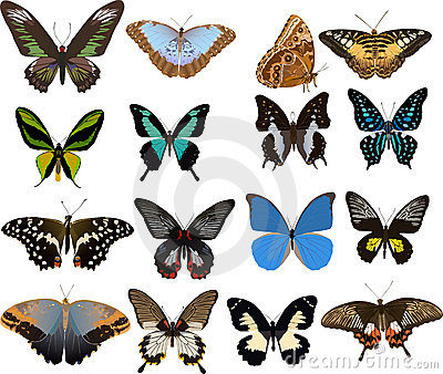 Set of sixteen color butterflies