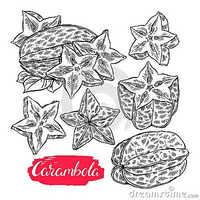 Set of sketch carambola Vector Illustration