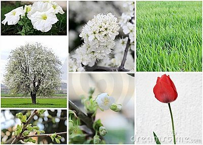 Set of spring photos