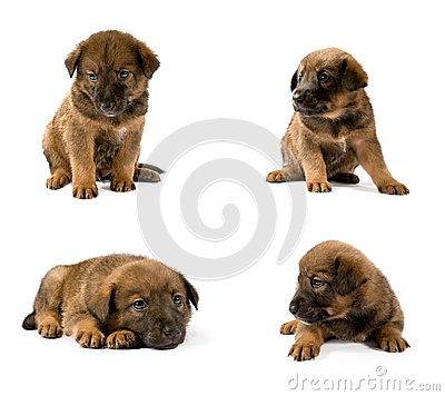 Set of studio portraits of young puppy
