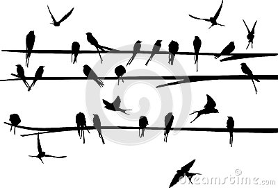 Set of Swallow stand and fly around the branch