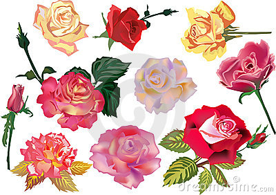 Set of ten color roses